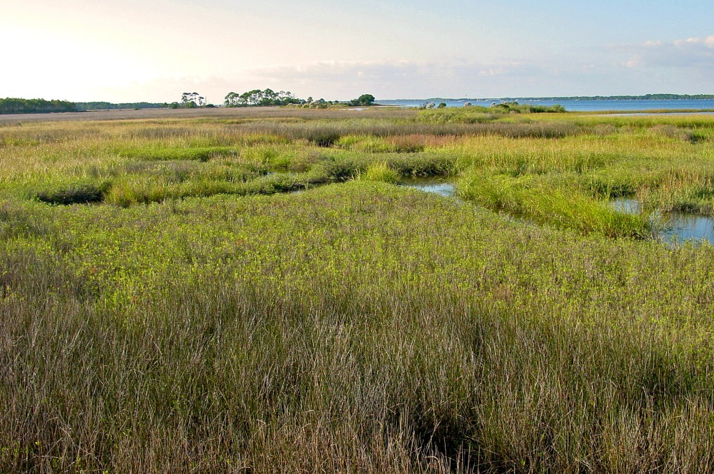 View of the Bald Point Island marsh.
