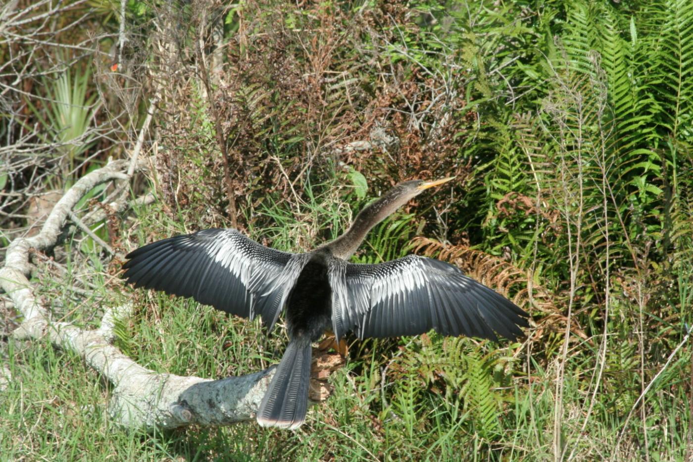 Image of a bird in flight.