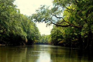 Image of the water and trees on the Chipola River.