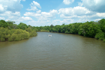 Image of the water and trees on the Choctawhatchee River.