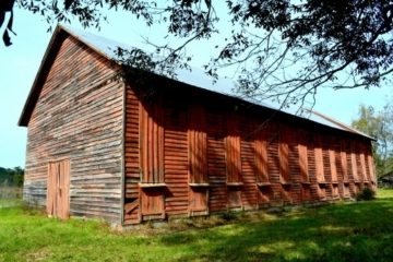 Image of the Davis Shade Tobacco Curing Barn.