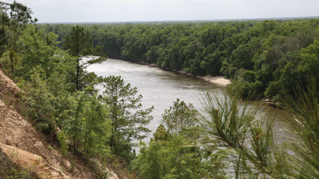Image of the Apalachicola River from the bluffs.