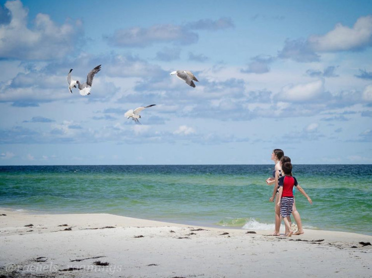 Image of kids on the beach with seagulls flying above.