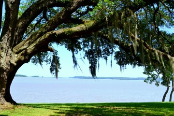 Image of the water as seen through trees at Sneads Park. off of River Road