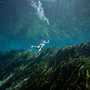 Snorkeler swimming in crystal clear water above the grasses.