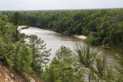 Image of the Apalachicola River from the bluff at Torreya State Park.