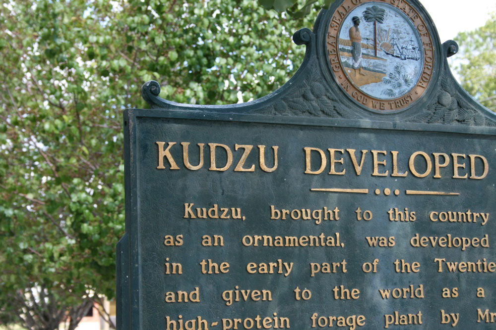Image of the Kudzu development site.