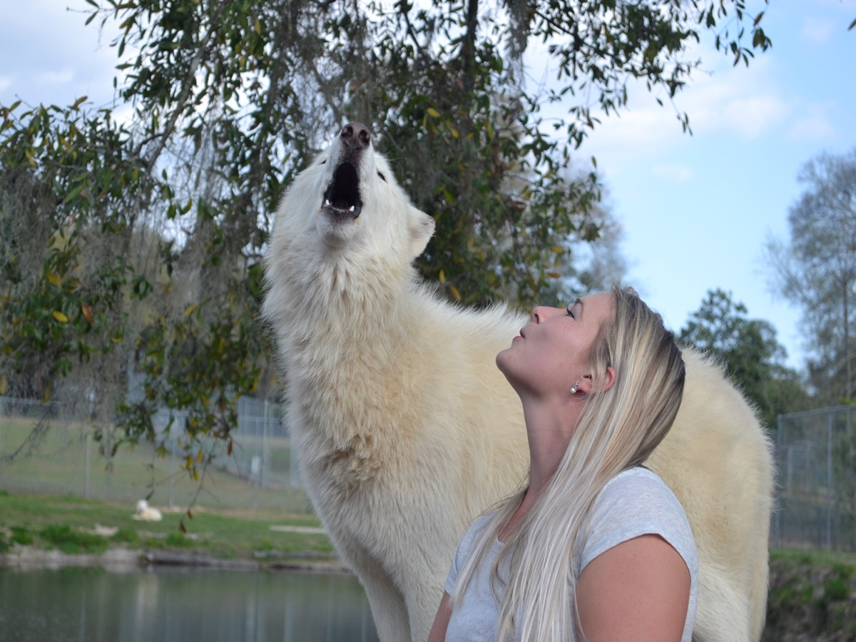Image of a white wolf and young woman howling.